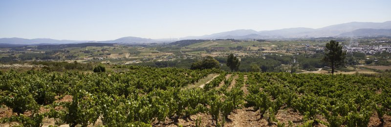 Overview of vineyard